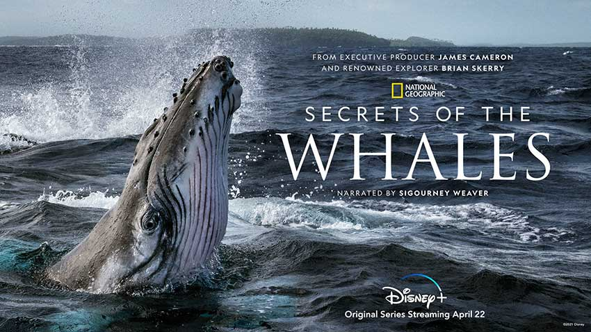 Secrets of the Whales Disney Plus